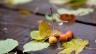 Vrt Priprema za zimu: krečenje stabala, rezultat glodar, malčiranje korenovog sistema, sanitarna rezidba, razrjeđivanje kruna, podmlađivanje orezivanje.
