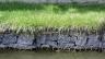 Ribnjak u predgrađu, jačanje obale jezera