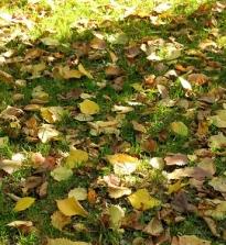 Правила подготовки газона к зиме на приусадебном участке
