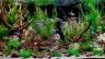 ცოცხალი მცენარეები აკვარიუმში: გჭირდებათ მცენარეთა აკვარიუმი, შერჩევა მცენარეთა ფოტოები, სინათლის აკვარიუმი მცენარეთა, ნიადაგის მცენარეები, გამწვანების მცენარეთა აკვარიუმი, რატომ არ მცენარეთა იზრდება აკვარიუმი.