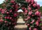 Како да се направи поддршка со рацете: за clematis, рози за, за краставици за грозје