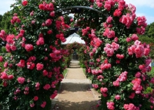 Как сделать опору своими руками: для клематиса, для роз, для огурцов, для винограда