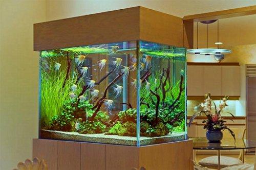 Aquarium im Inneren einer modernen Wohnung