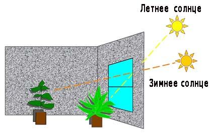 Vidiniai augalai - sodas, kambariniai augalai ir gėlės (nuotrauka, video, apžvalgos) - Indasad.ru