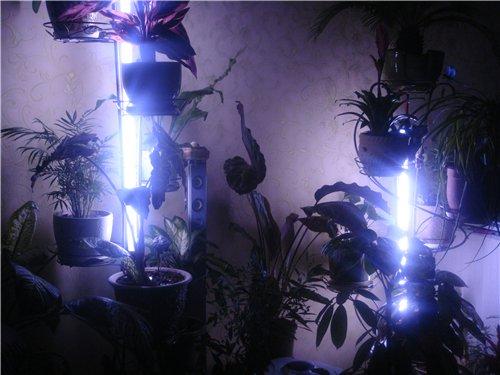 Подсветка для цветов светодиодная своими руками 50
