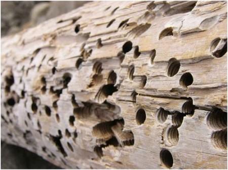 štetočine od insekata