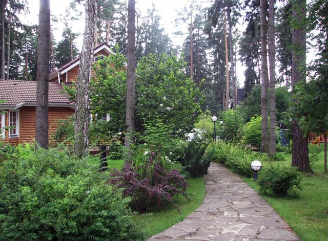 Ландшафтный дизайн участка с соснами