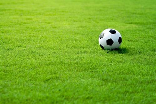 rumput olahraga