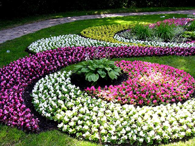 ग्राउंड कवर प्लांट्स और कालीन फूल बिस्तर। । कालीन फूल बिस्तर - मूल उद्यान सजावट। । फूल मिट्टी का उपयोग कैसे करें