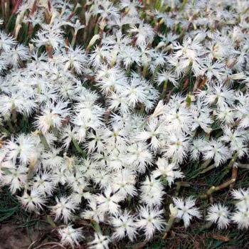 स्काई और पृथ्वी के बीच रियाज़ान क्षेत्र संयंत्र इंटरमीडिएरी के संरक्षित पौधे।