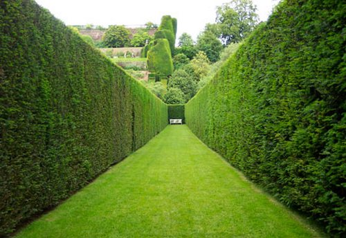 forming-cutting-hedges