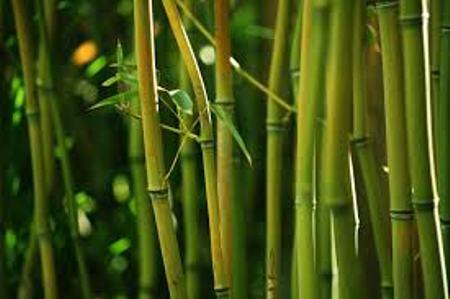 bambuk_v_interyere16