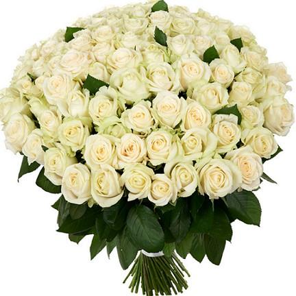 101-bijele-ruže-1