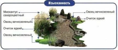 suhiy_ruchey119