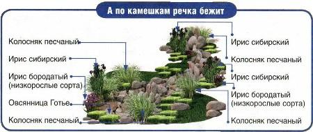 suhiy_ruchey15