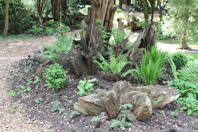 Сад корней своими руками 97