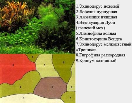 rastenyja_dlya_akvariuma15