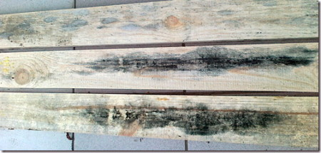 07_Грибок древесины