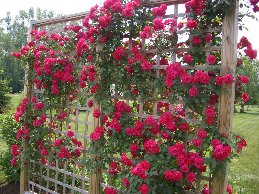 Wie Sie selbst unterstützen: für Clematis, für Rosen, für Gurken ...